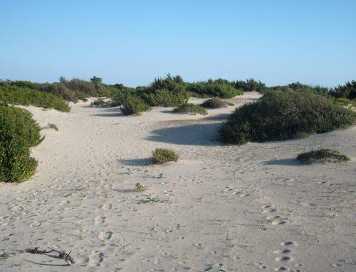 Piante Spontanee dei litorali rocciosi e sabbiosi