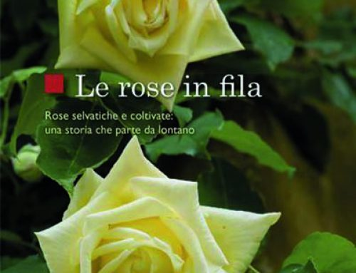 Le rose in fila