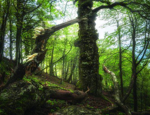 """Atti della giornata """"Un uomo secolare a tutela di foreste millenarie.  Omaggio a Fabio Clauser per il suo secolo di vita"""" (Pratovecchio, 26 ottobre 2019)"""